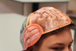 """Une """"carte"""" du cerveau a été construite par les collégiens. (photo : José Olivares)"""